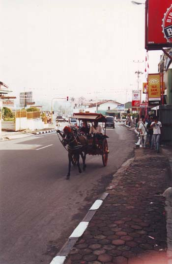 Horse and cart for transport in Bukkitinggi