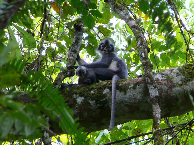 2 nights Bukit Lawang Tour Sumatra Indonesia